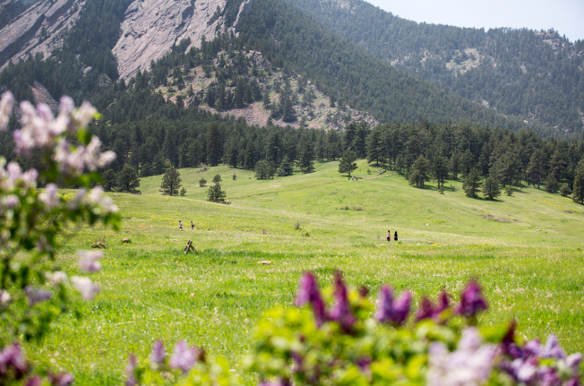 Meadow Trail with mountain in background and flowers in front